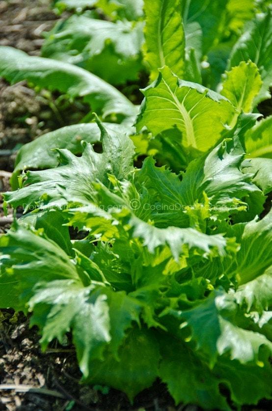 Orgánicos - ¿Valen la Pena?: Existe mucha controversia sobre la cuestión del valor real de pagar más por alimentos orgánicos.